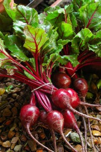 rote-beete-02