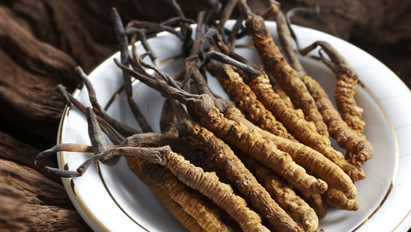 Cordyceps Flowgrade Mushrooms